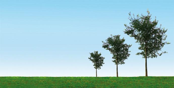 alberi, natura, campagna